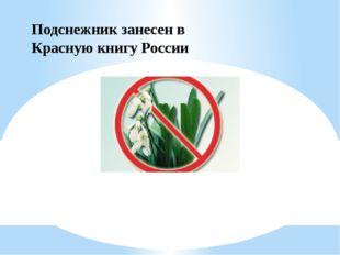 Подснежник занесен в Красную книгу России