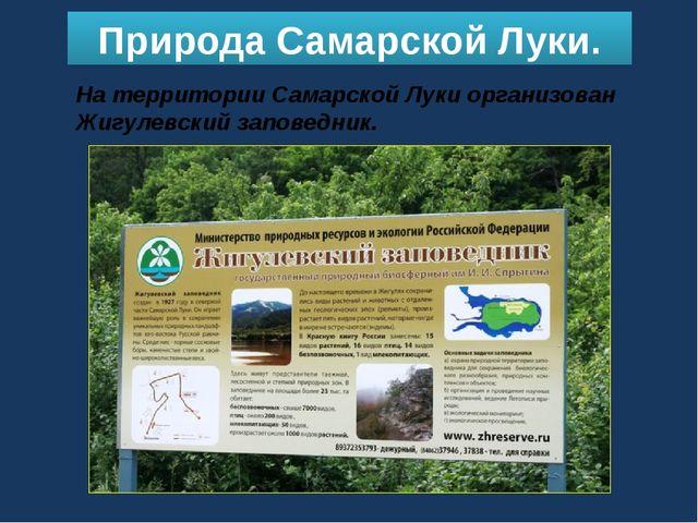 Природа Самарской Луки. На территории Самарской Луки организован Жигулевский...