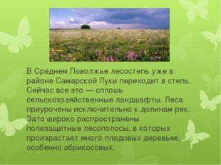 В Среднем Поволжье лесостепь уже в районе Самарской Луки переходит в степь.