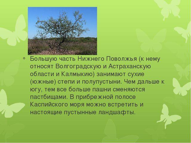 Большую часть Нижнего Поволжья (к нему относят Волгоградскую и Астраханскую...