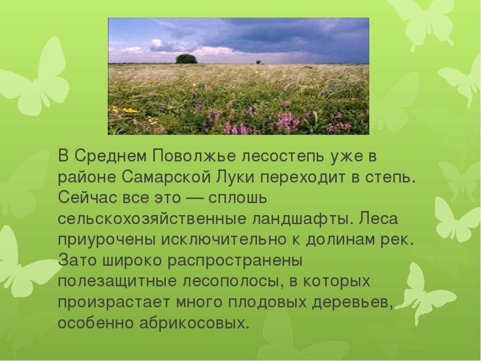 В Среднем Поволжье лесостепь уже в районе Самарской Луки переходит в степь....