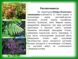 Растительность На территорииПечоро-Илычского заповедникавстречаются 11 очен