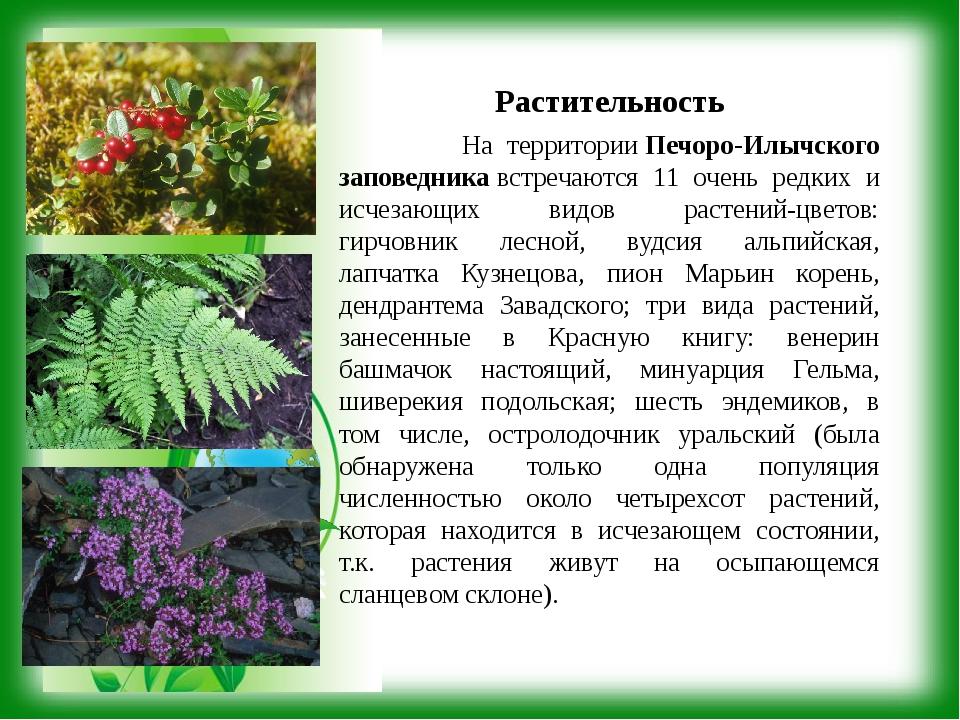 Растительность На территорииПечоро-Илычского заповедникавстречаются 11 очен...