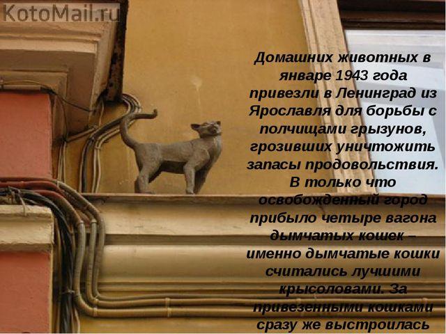 Домашних животных в январе 1943 года привезли в Ленинград из Ярославля для бо...
