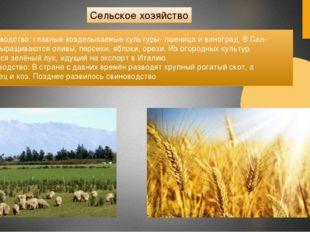 Сельское хозяйство Растениеводство: главные возделываемые культуры- пшеница