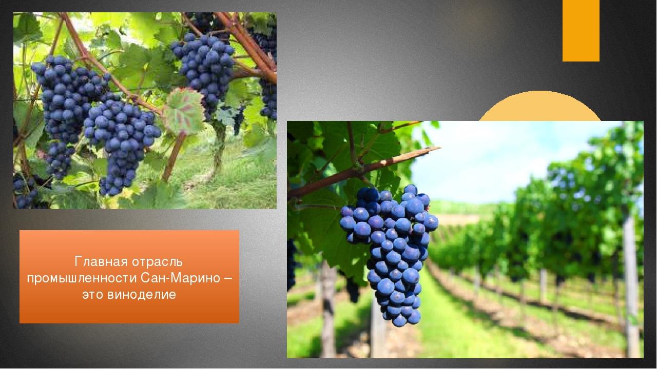 Главная отрасль промышленности Сан-Марино – это виноделие