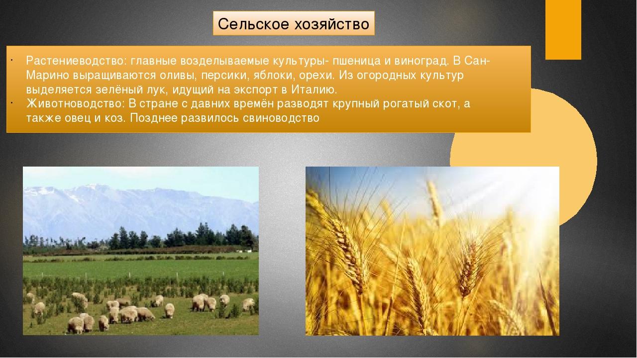 Сельское хозяйство Растениеводство: главные возделываемые культуры- пшеница...