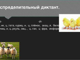 Распределительный диктант. -Ы- -И- Ц..нк, ц..тата, куриц..н, ц..плёнок, акац.