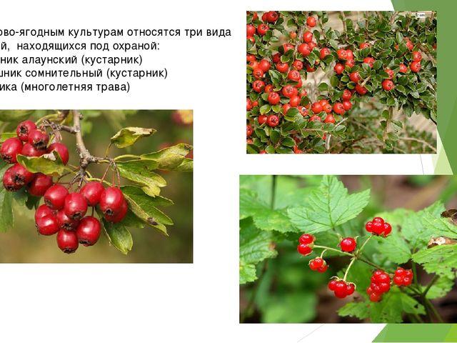 К плодово-ягодным культурам относятся три вида растений, находящихся под охр...