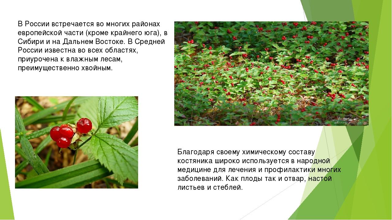В России встречается во многих районах европейской части (кроме крайнего юга)...