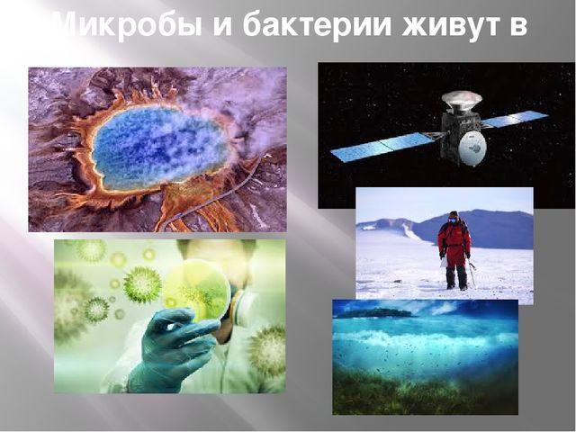 Микробы и бактерии живут в