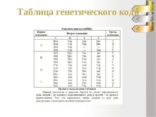Решение задачи Последовательность нуклеотидов на и – РНК: ЦАЦАУАЦЦУУЦА 2. ант
