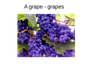 A grape - grapes