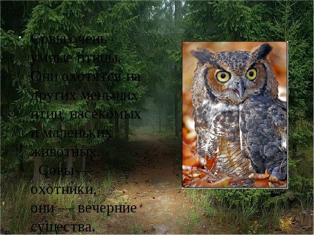 Совы очень умные птицы. Они охотятся на других меньших птиц, насекомых и мал...
