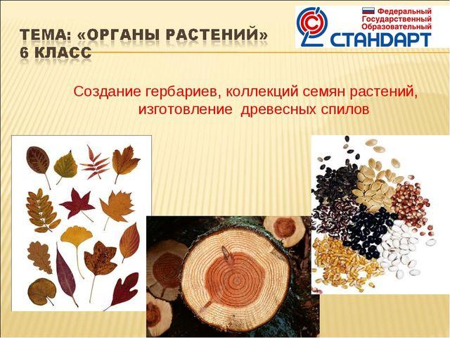 Создание гербариев, коллекций семян растений, изготовление древесных спилов
