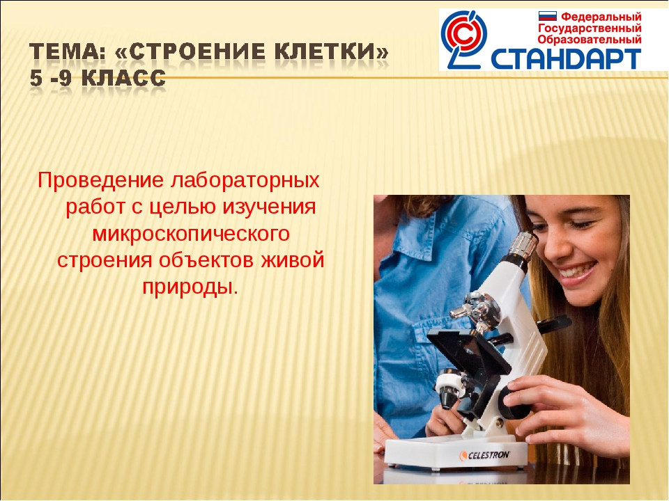 Проведение лабораторных работ с целью изучения микроскопического строения объ...