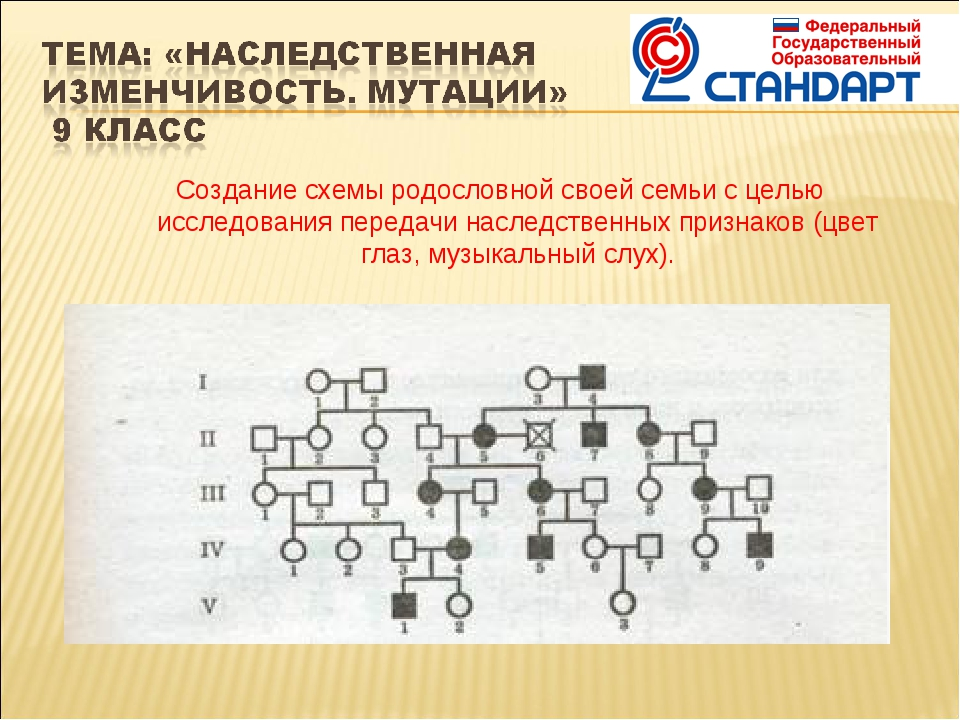 Создание схемы родословной своей семьи с целью исследования передачи наследст...