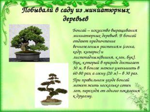 Побывали в саду из миниатюрных деревьев Бонсай – искусство выращивания миниат