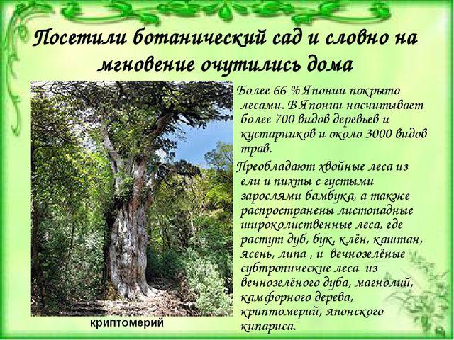 Посетили ботанический сад и словно на мгновение очутились дома Более 66% Япо...