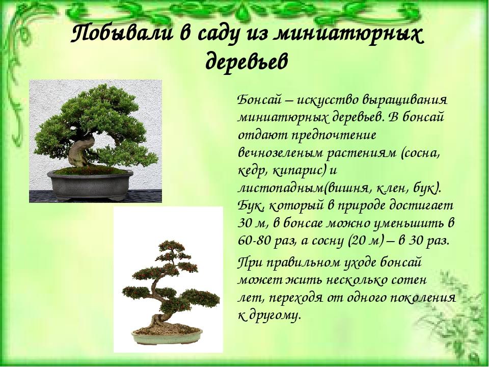 Побывали в саду из миниатюрных деревьев Бонсай – искусство выращивания миниат...