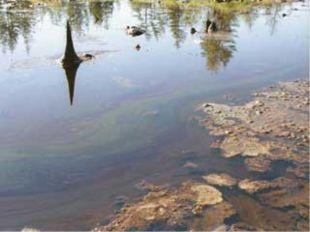 1. Загрязнение нефтью и нефтепродуктами. Приводит к появлению нефтяных