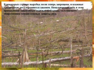 В некоторых странах вырубка лесов теперь запрещена, и влажные тропические ле