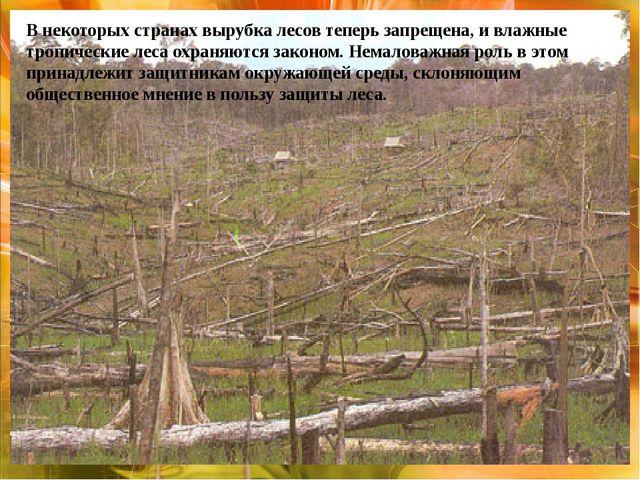 В некоторых странах вырубка лесов теперь запрещена, и влажные тропические ле...