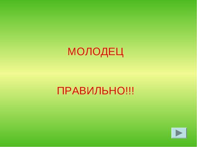 МОЛОДЕЦ ПРАВИЛЬНО!!!
