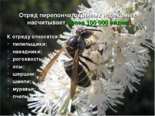 Отряд перепончатокрылых насекомых насчитывает более 100 000 видов К отряду от
