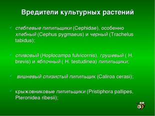 Вредители культурных растений стеблевые пилильщики (Cephidae), особенно хлебн