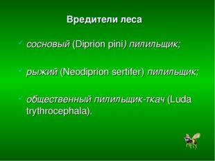 Вредители леса сосновый (Diprion pini) пилильщик; рыжий (Neodiprion sertifer)