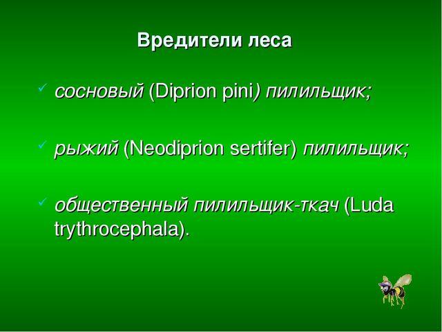 Вредители леса сосновый (Diprion pini) пилильщик; рыжий (Neodiprion sertifer)...