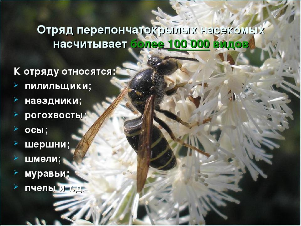Отряд перепончатокрылых насекомых насчитывает более 100 000 видов К отряду от...