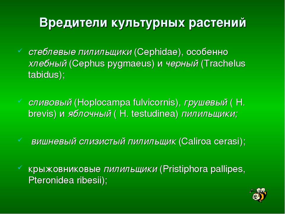 Вредители культурных растений стеблевые пилильщики (Cephidae), особенно хлебн...