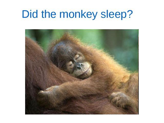 Did the monkey sleep?
