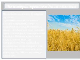 Из истории происхождения пшеницы Пшеница очень древнее культурное растение.