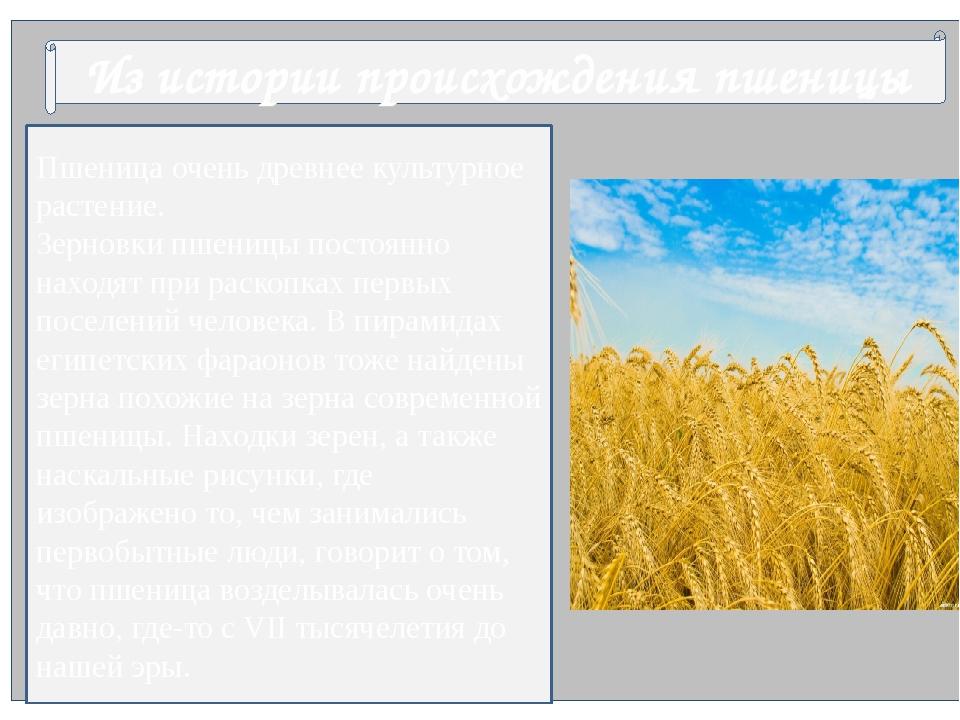 Из истории происхождения пшеницы Пшеница очень древнее культурное растение....