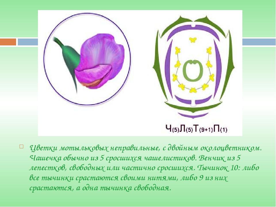 Цветки мотыльковых неправильные, с двойным околоцветником. Чашечка обычно из...