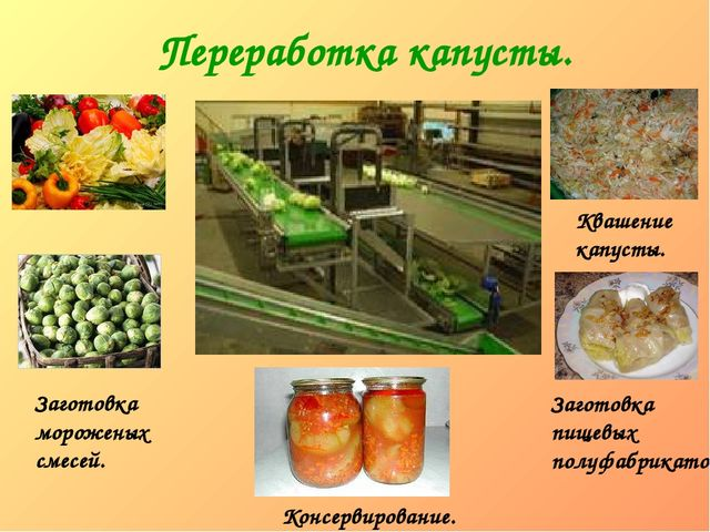 Переработка капусты. Заготовка мороженых смесей. Квашение капусты. Заготовка...