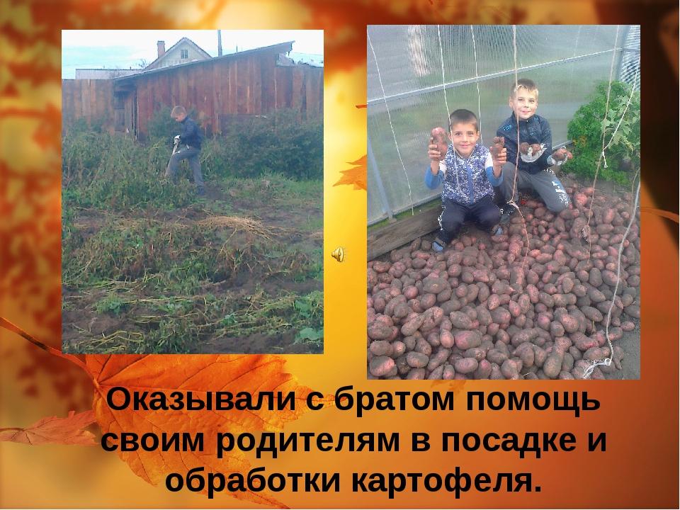 Оказывали с братом помощь своим родителям в посадке и обработки картофеля.