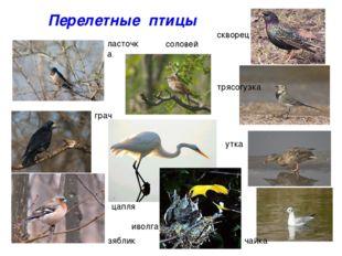 Перелетные птицы ласточка соловей скворец трясогузка грач зяблик утка чайка и