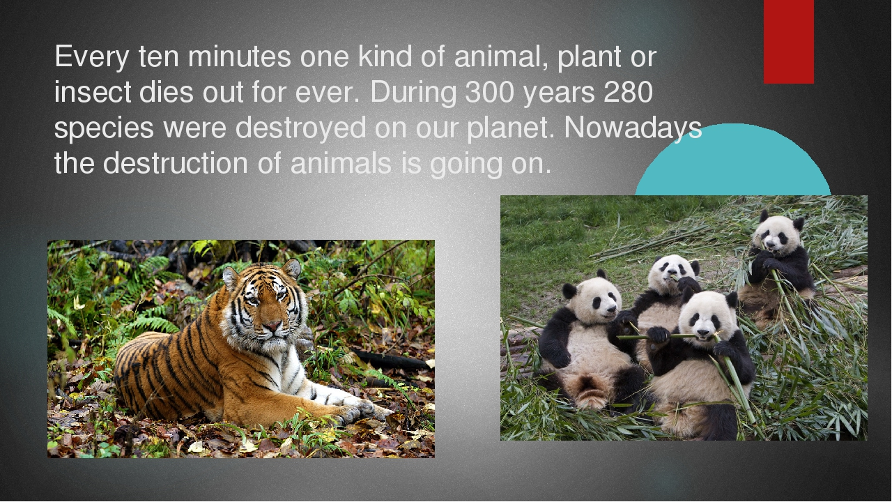 Every ten minutes one kind of animal, plant or insect dies out for ever. Duri...