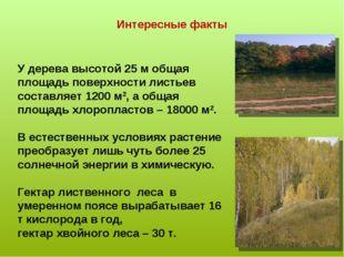 Интересные факты У дерева высотой 25 м общая площадь поверхности листьев сост