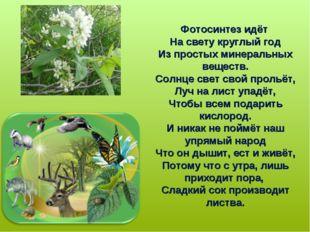 Фотосинтез идёт На свету круглый год Из простых минеральных веществ. Солнце с