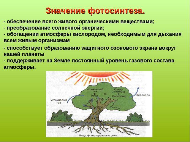 Значение фотосинтеза. - обеспечение всего живого органическими веществами; -...