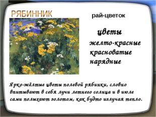желто-красные красноватые нарядные рай-цветок Ярко-жёлтые цветы полевой рябин