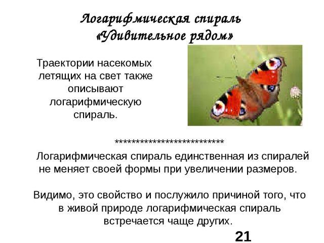 Логарифмическая спираль «Удивительное рядом» Траектории насекомых летящих на...