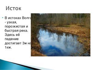 В истоках Волга - узкая, порожистая и быстрая река. Здесь её падение достигае