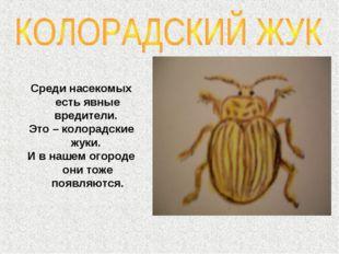 Среди насекомых есть явные вредители. Это – колорадские жуки. И в нашем огоро