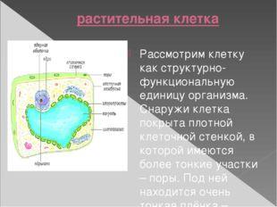 растительная клетка Рассмотрим клетку как структурно-функциональную единицу